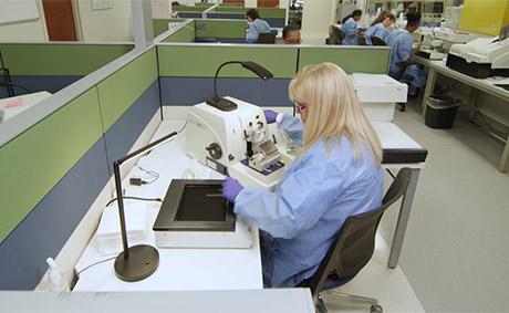 Pathologists Working in a Lab