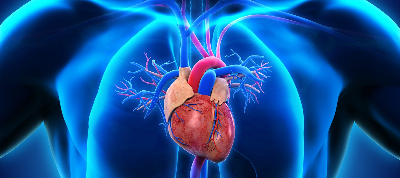 image of heart with blue shadow body