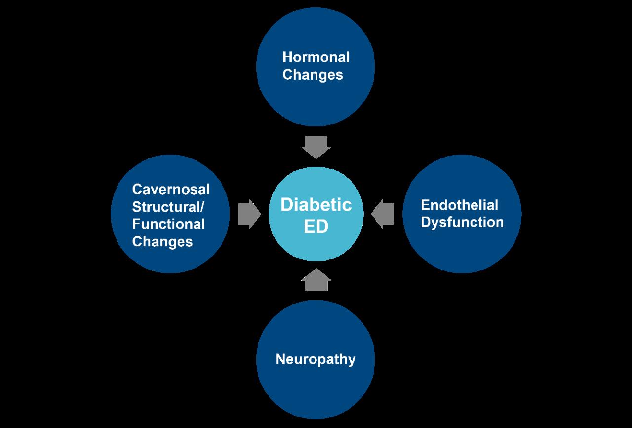 Hormonal changes -> Diabetic ED | cavernosal structural/functional changes -> Diabetic ED | endothelial dysfunction -> Diabetic ED | neuropathy -> Diabetic ED