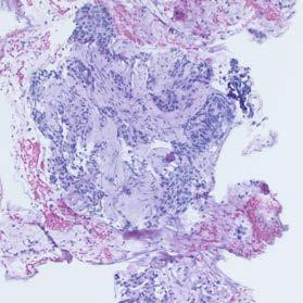 Quality Histology Sample